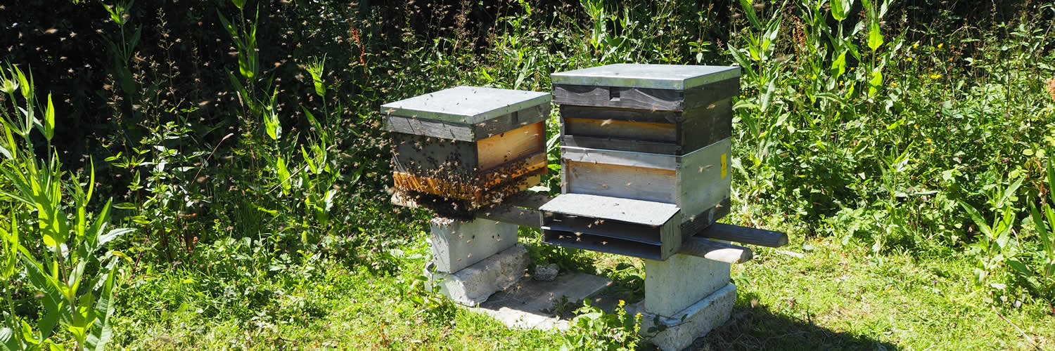 hives at west cornwall beekeepers' association training apiary