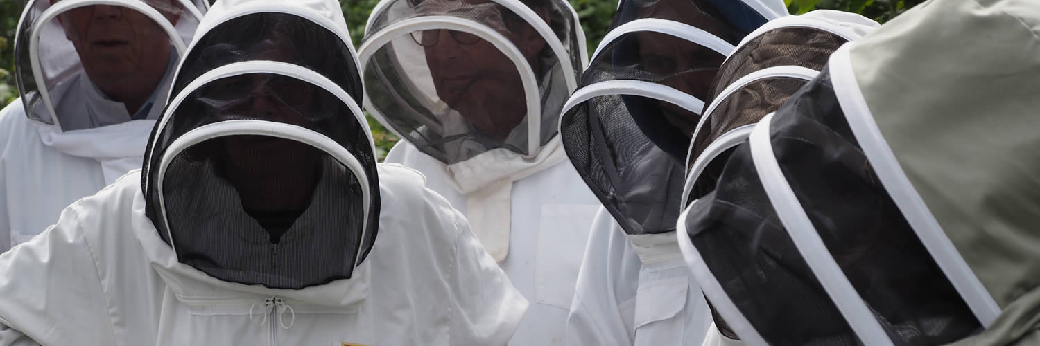 beekeepers at west cornwall beekeepers' association training apiary