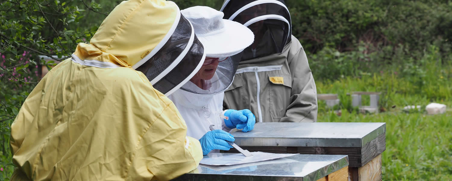members of west cornwall beekeepers' association at the training apiary