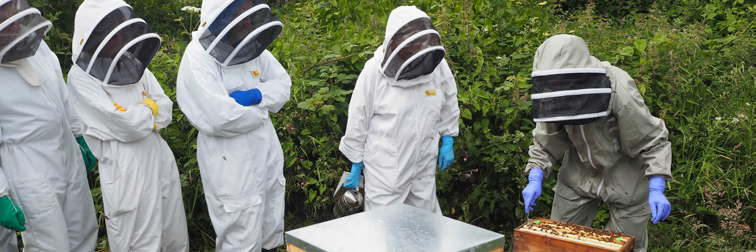 members at the west cornwall beekeepers training apiary