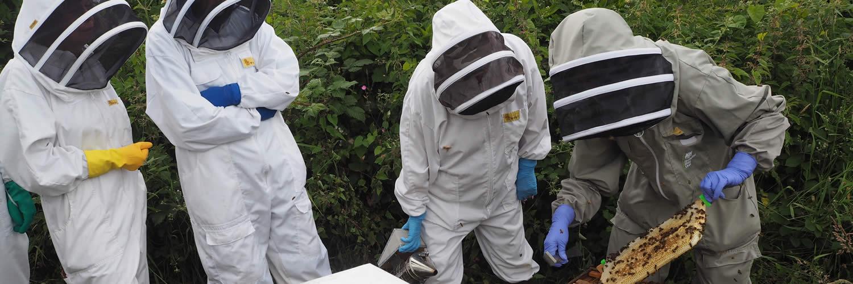 beekeepers at west cornwall beekeeping training apiary