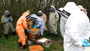 west cornwall beekeepers training apiary
