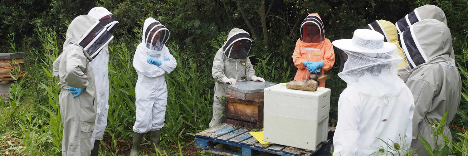 west cornwall beekeepers' association training apiary