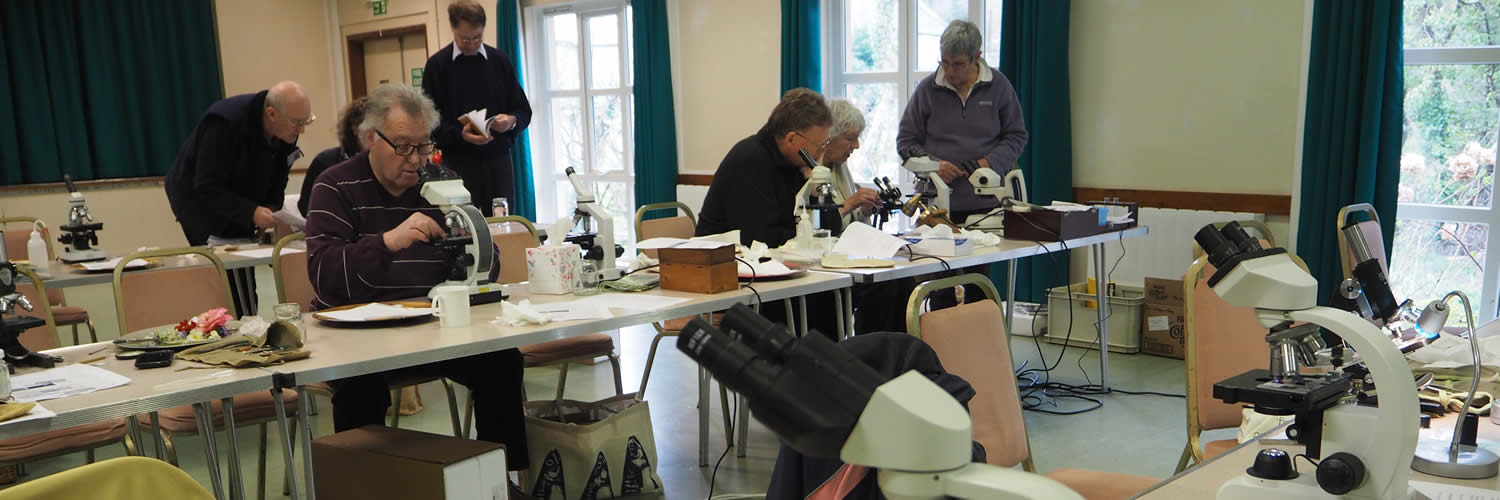 west cornwall beekeepers' association at a microscopy day