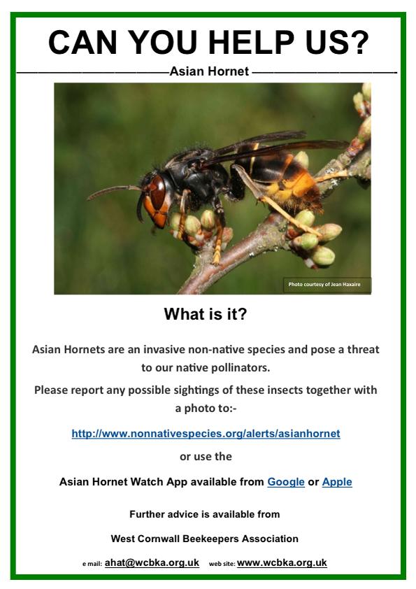 asian-hornet-poster
